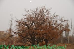 seyedan_khorashad10
