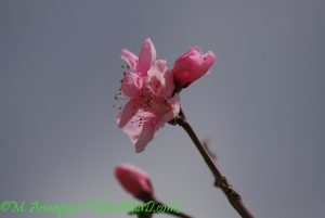 arianpour_spring_flower_7